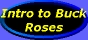 [Introduction to Buck Roses]